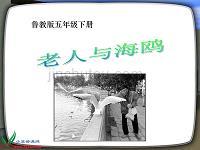 魯教版語文五年級下冊《老人與海鷗》