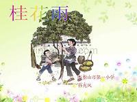 桂花雨-課件.