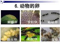 人教版四下科學植物的卵