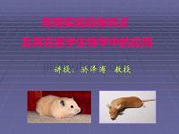 常用實驗動物特點與其在醫學生物學中應用