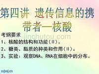 核酸糖类和脂质描述