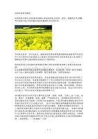 油菜花粉前列腺炎