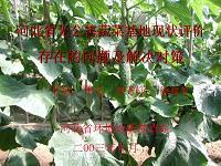 河北省无公害蔬菜基地现状评价存在的问题及解决对策