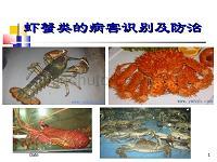 虾蟹类病害识别及防治PPT讲解