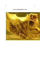 史上最全耳鼻喉解剖摄影和手术图片