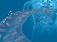 心血管常见疾病及治疗药物